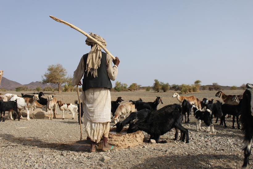 fulani-herdsmen2.jpg.jpeg