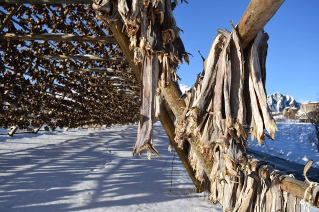 A fishy mission: The Nigerian love for stockfishA fishy mission: The Nigerian love for stockfish