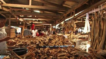 A fishy mission: The Nigerian love for stockfish