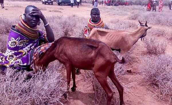 """Drought """"solution"""" becomes a major menace in Kenya once again"""