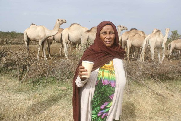 Camel milk is a healthy investment