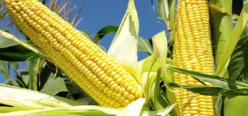 1.9m Malawi families face food shortage