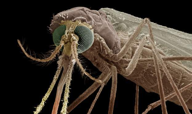 Mosquitoes will be under the microscope at the meeting.