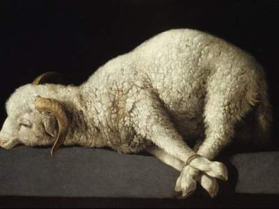 Sacrificial lamb … Francisco de Zurbarán's Agnus Dei, 1635-1640. Photograph: Masterpics/Alamy Stock Photo