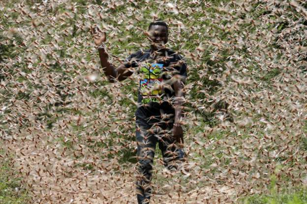 Kenya is one of the countries that has been hit by a locust swarm