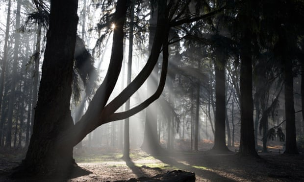 If you go down to the woods … dark discoveries in Nothing Can Hurt You. Photograph: Dominic Burke/Alamy